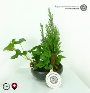 Flacher porzellan Pflanzentopf mit Wasser-Look (schwarz, bepflanzt)