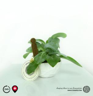 Porzellan Pflanzentopf #12 (rund – small, bepflanzt)