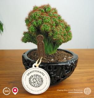 Galaxy Porzellan Kaktus-Schale / Blumentopf (12 cm – schwarz, bepflanzt)