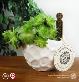 Massiver porzellan Designer-Pflanzentopf #5 mit Bepflanzung