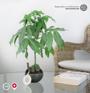 Porzellan Pflanzentopf im Golfball-Look (rund – gross, matt schwarz, bepflanzt)