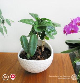 Porzellan Pflanzentopf im Golfball-Look (rund Gr. XL, weiss, bepflanzt)